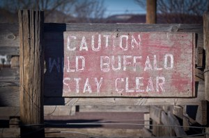 caution_wild_buffalo