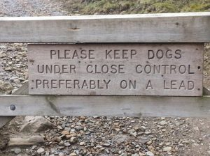 control_dogs