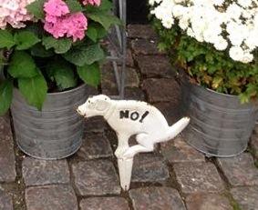No_dog
