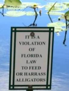 dont_feed_alligators 2